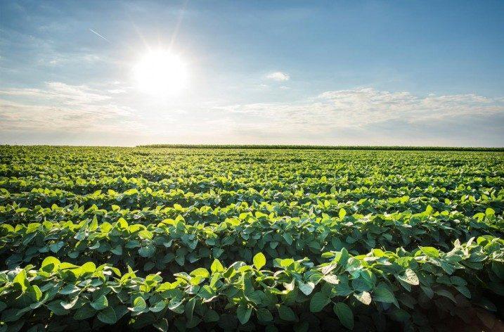 Ricercatori USA hanno sviluppato una nuova varietà di soia con riduzione delle proteine allergeniche