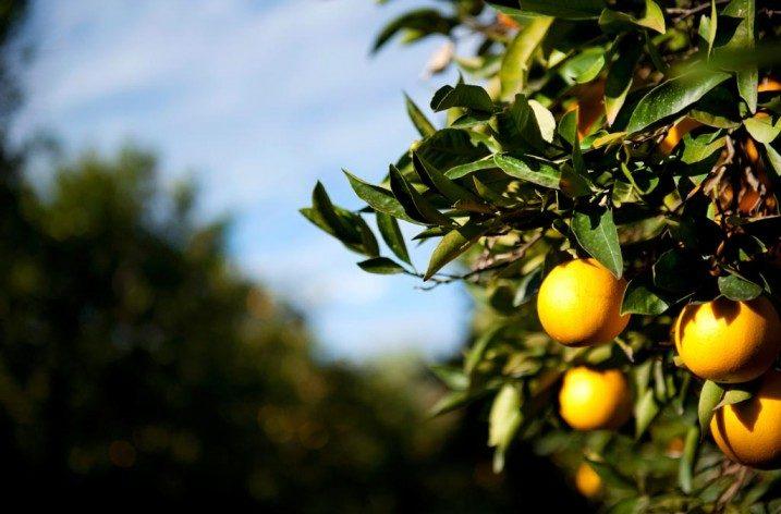 Vitamina C e contributo alla normale funzione del sistema immunitario: valutazione degli health claim