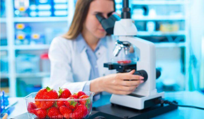 scienziata laboratorio microscopio fragole