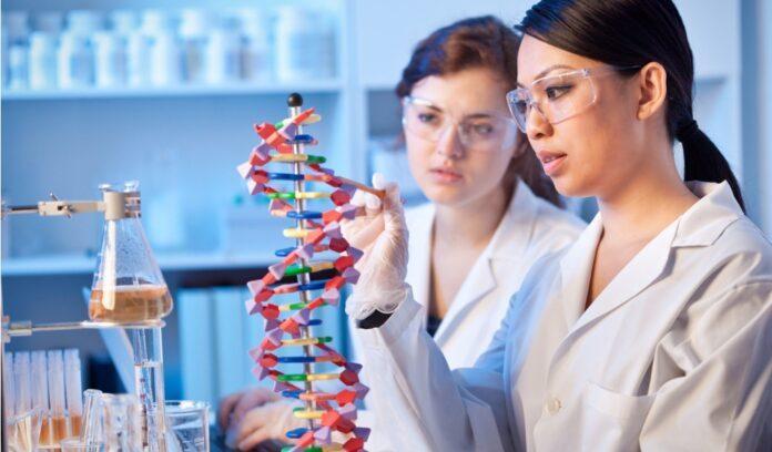 modèle d'adn helix femmes scientifiques