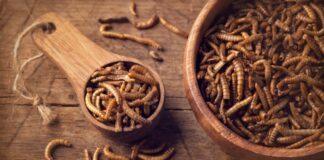 larve di insetti commestibili