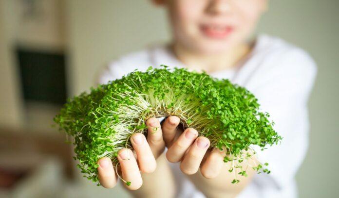 microgreens superfood