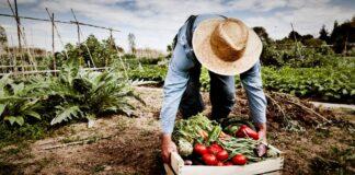 OMS diete sostenibili